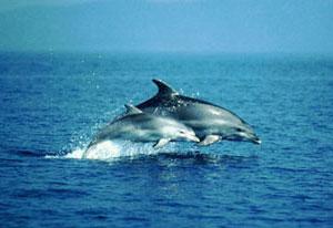 Posvojite dupina Dolphins