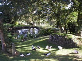 Neuadd Farm Cottages Duck Pond