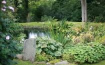 beautiful-pond-view