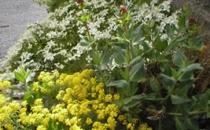 Neuadd Farm Cottages Gardens